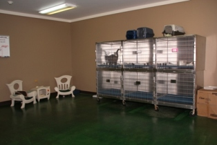Pet Boarding: Cat Boarding Room