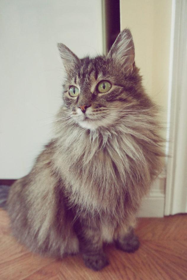 The benefits of cat neutering