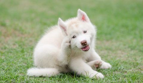 What causes an itchy dog?