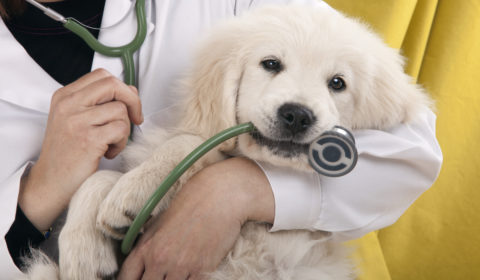 Can pet health insurance help you?